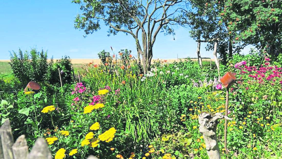 Zu sehen ist ein Garten, in dem bunte Blumen wachsen (Symbolbild).