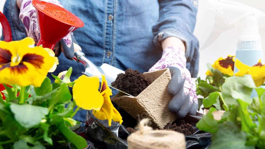 Es sind Hände zu sehen, die in Nahaufnahme Erde in einen pflanztopf mit einer Schaufel füllen. Im Vordergrund sind gelbe Stiefmütterchen.