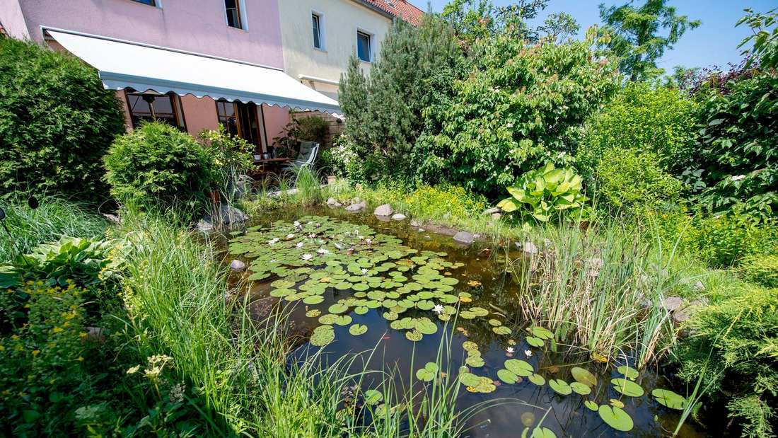 So wird Ihr Gartenteich zum schönen Biotop