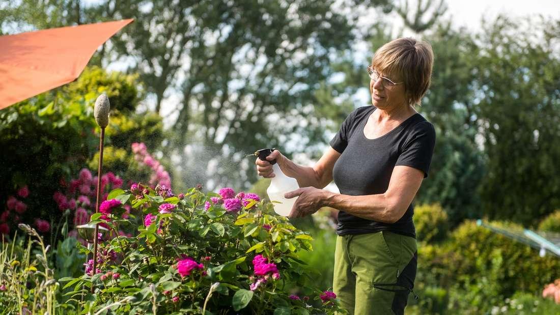 Gegen Läuse und Milben: Insektizide bei Hitze weniger wirksam