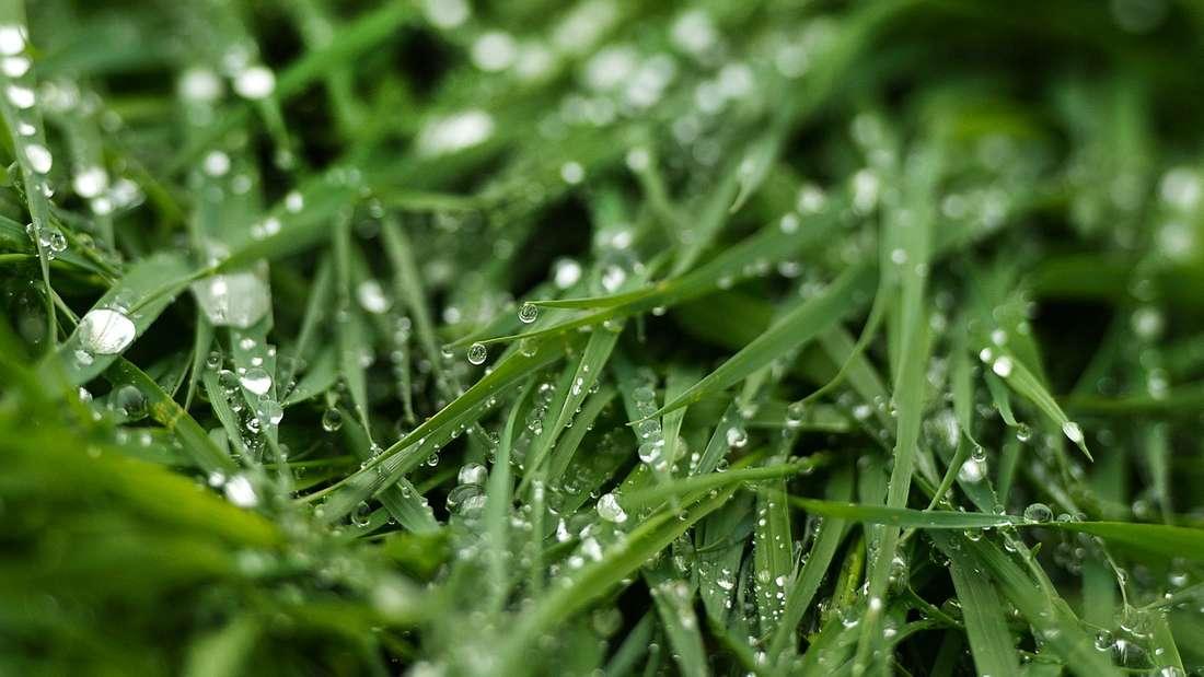 Nach Gewitter: Richtig nassen Rasen nicht betreten