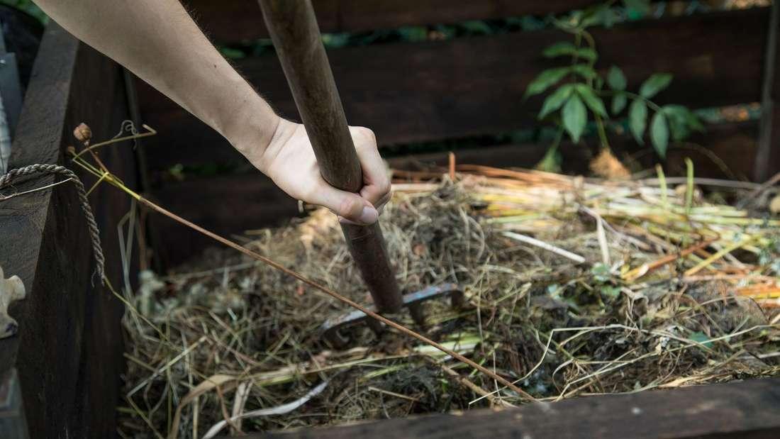Kompost-Verbot für Pflanzen mit Wurzelfäule